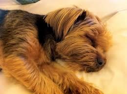 chien qui dort trop