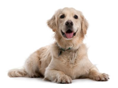 technique dressage chien