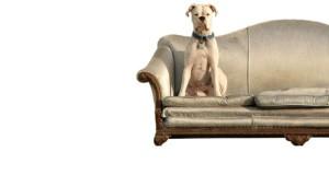 chien-propre-assis-sur-un-canape