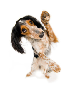astuces dressage chien