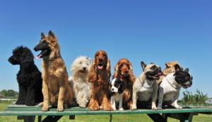 Dressage de chien pour aveugle