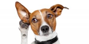 chien qui devient sourd