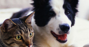 chat-et-chien-ou-comment-rendre-un-chien-propre