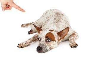chien têtu et difficile
